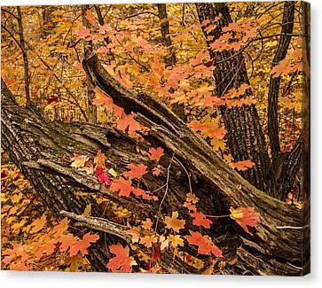 Westfork Foilage Canvas Print by Tom Kelly