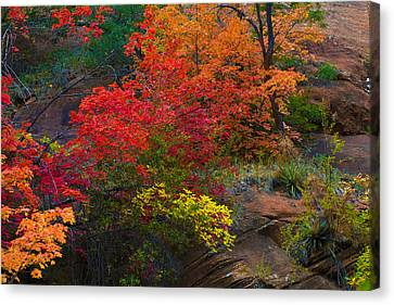 Canvas Print featuring the photograph Westfork's Colors by Tom Kelly