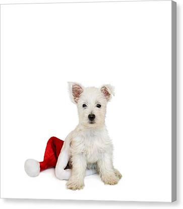 Westie Puppy And Santa Hat Canvas Print by Natalie Kinnear