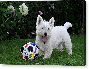 Westie World Cup Canvas Print