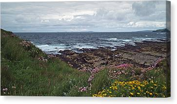 Westray Firth Canvas Print by Steve Watson