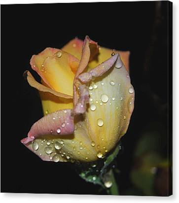 Wet And Wonderful Canvas Print