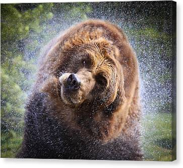 Canvas Print featuring the photograph Wet Griz by Steve McKinzie