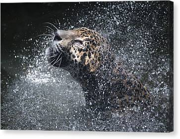 Canvas Print featuring the pyrography Wet Jaguar  by Shoal Hollingsworth