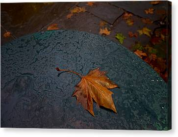 Wet Leaf Canvas Print by Mike Horvath