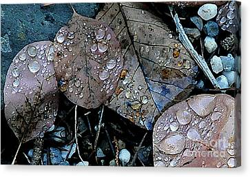 Wet Leaves Canvas Print by Artist and Photographer Laura Wrede
