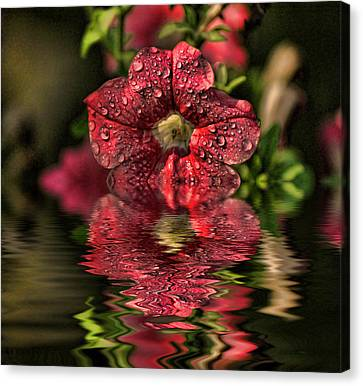 Wet Petunia Canvas Print by Rick Friedle