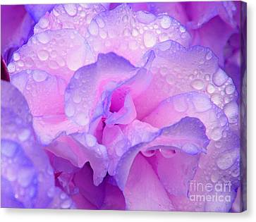 Canvas Print featuring the photograph Wet Rose In Pink And Violet by Nareeta Martin