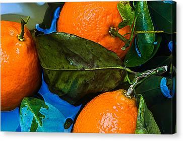 Tangerines Canvas Print - Wet Tangerines by Alexander Senin