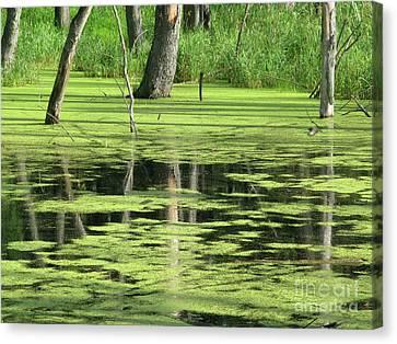 Wetland Reflection Canvas Print by Ann Horn