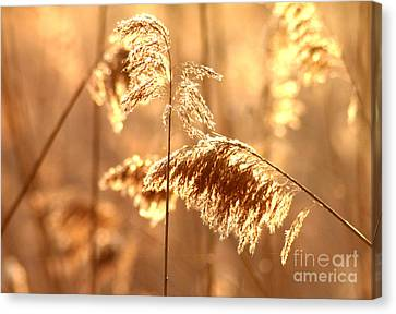 Wetland Sunrise Canvas Print