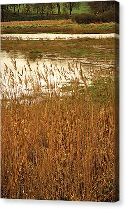 Canvas Print featuring the digital art Wetlands by David Davies