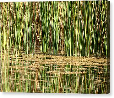 Wetlands Canvas Print by Laurel Powell