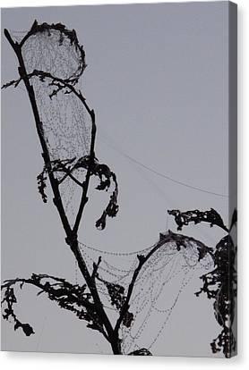 Wetting The Spiderweb. Canvas Print
