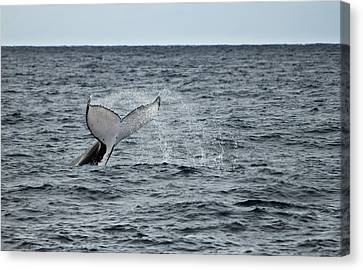 Canvas Print featuring the photograph Whale Of A Time by Miroslava Jurcik