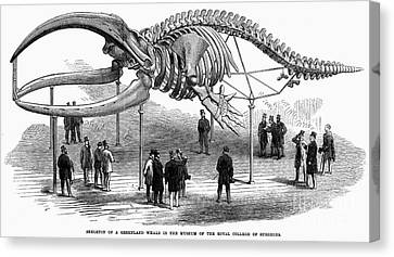 Whale Skeleton, 1866 Canvas Print by Granger