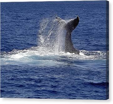 Whale Tale Splash Canvas Print by Penny Lisowski