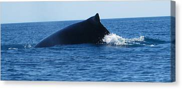 Canvas Print featuring the photograph Whale by Tony Mathews
