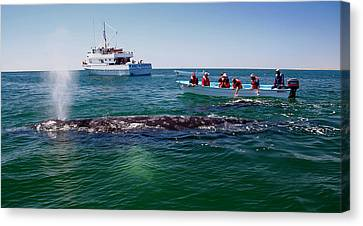 Whale Watch Canvas Print by Doug Gould