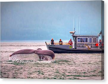 Whale Watching Canvas Print by Tom Weisbrook