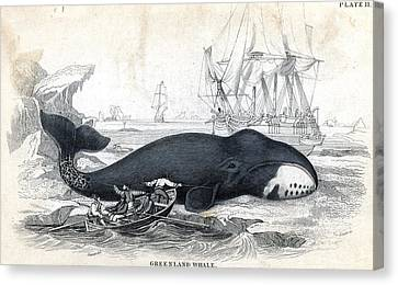 Whales & Whaling, C1840 Canvas Print by Granger