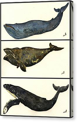 Marine Mammals Canvas Print - Whales Compilation 1 by Juan  Bosco