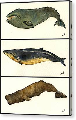 Marine Mammals Canvas Print - Whales Compilation 2 by Juan  Bosco