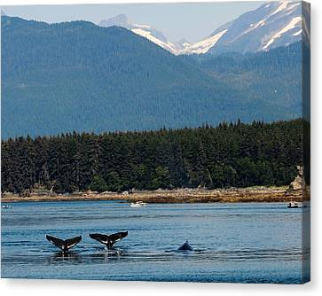 Whales In Alaska Canvas Print