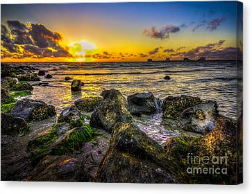 Seaweed Canvas Print - What A Day by Marvin Spates