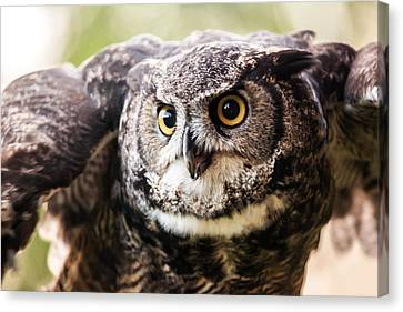 What A Hoot Canvas Print