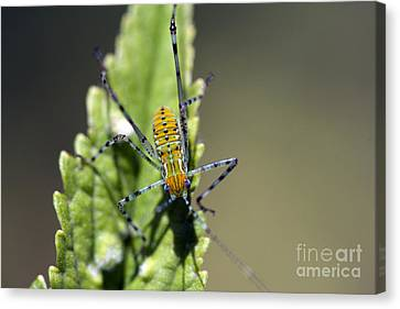 What Am I? Canvas Print by Kristy Ollis