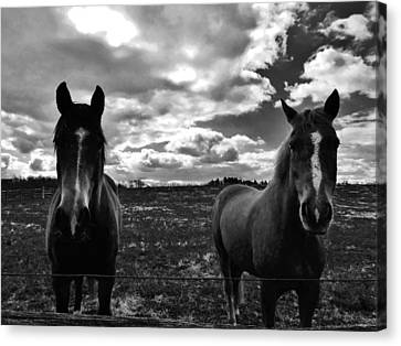 What Are You Looking At Canvas Print by Greg Kear