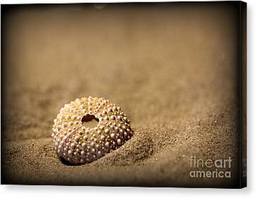 What Becomes Sand Canvas Print