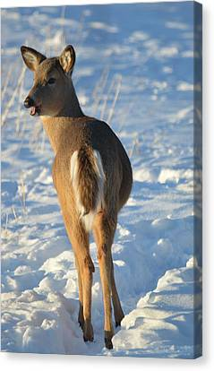 Canvas Print featuring the photograph What Do You Think This Deer Is Saying? by Dacia Doroff