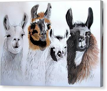 Llama Canvas Print - What Is Up by Joette Snyder