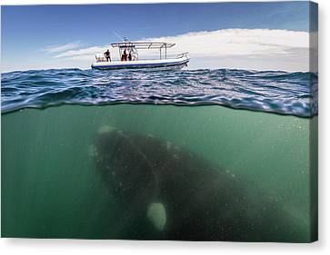 What Lies Beneath Canvas Print by Justin Hofman