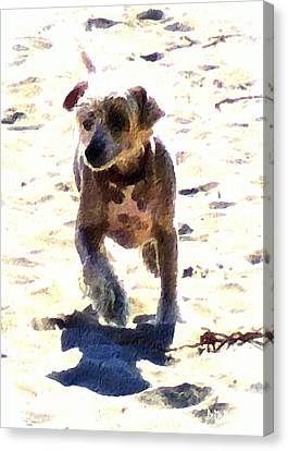 What Shall We Call Him? Canvas Print by Brian D Meredith
