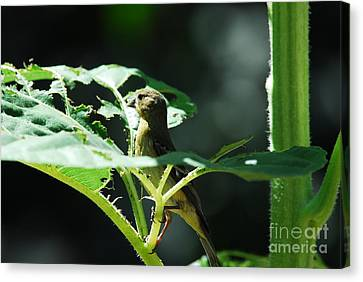Canvas Print featuring the photograph What Was That? by Laurianna Taylor