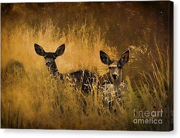 Canvas Print featuring the photograph What'cha Lookin' At by Karen Slagle