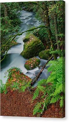 Canvas Print featuring the photograph Whatcom Falls 1 by Jacqui Boonstra