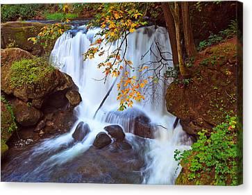 Whatcom Falls Early Autumn. Canvas Print by Eti Reid