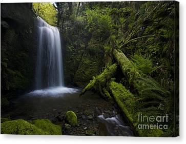 Whatcom Falls Serenity Canvas Print