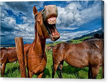 What's So Funny Canvas Print by Cat Connor