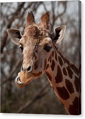 What's Ya Talking About? Canvas Print