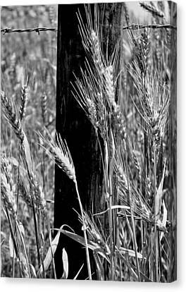 Canvas Print featuring the photograph Wheat And Fence Post by Ellen Tully