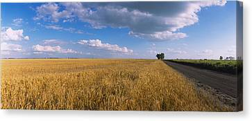 Wheat Crop In A Field, North Dakota, Usa Canvas Print by Panoramic Images