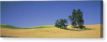 Simple Beauty In Colors Canvas Print - Wheat Crop In The Field, Washington by Panoramic Images