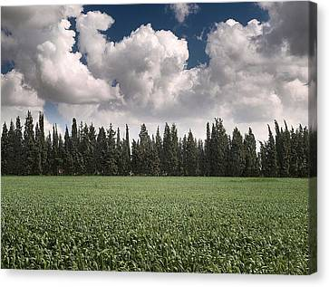 Wheat Field And Clouds Canvas Print by Meir Ezrachi