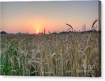 D700 Canvas Print - Wheat Field Sunrise by Michael Ver Sprill