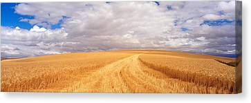 Wa Canvas Print - Wheat Field, Washington State, Usa by Panoramic Images